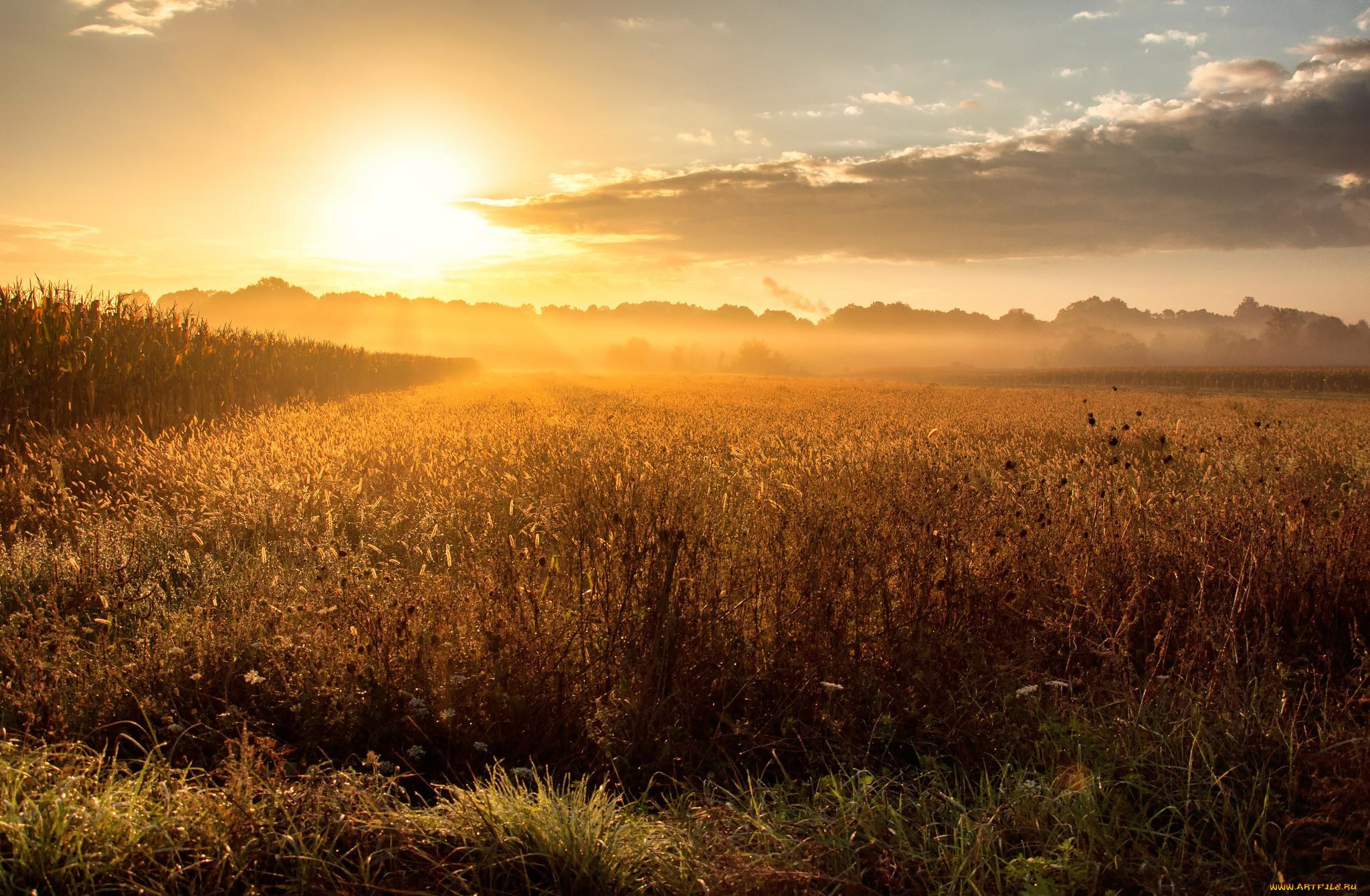 восход солнца в поле фото более